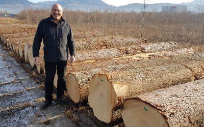 Vorarlberger Nadelwertholzsubmission 2016: Tanne über Fichtenpreis