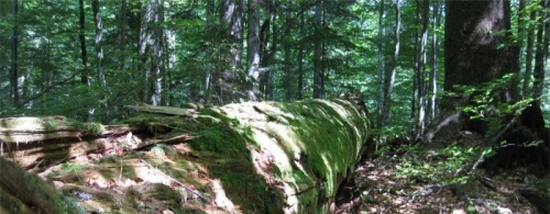Vernachlässigter Wald